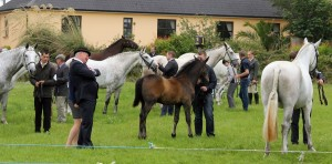 large group horses 3
